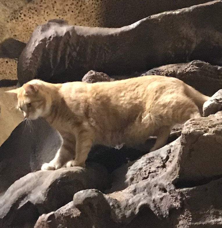 JD the cave cat